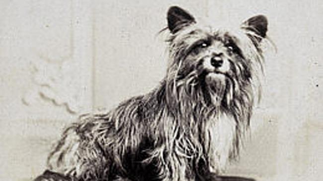 Bobby, il cane di Edimburgo
