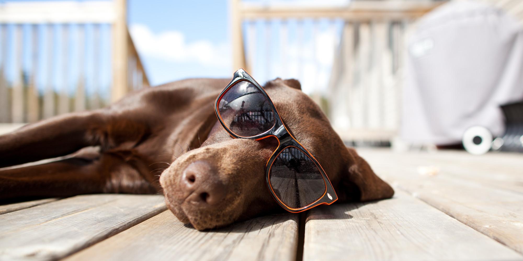 Tempo da cani, quando il meteo interessa i nostri amici a 4 zampe: la termoregolazione