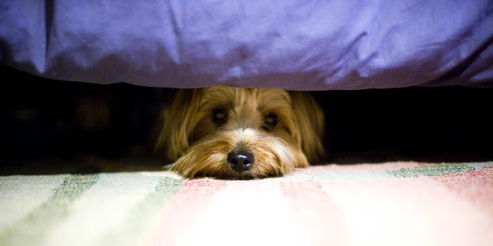 10 cose che i proprietari di cane NON devono fare