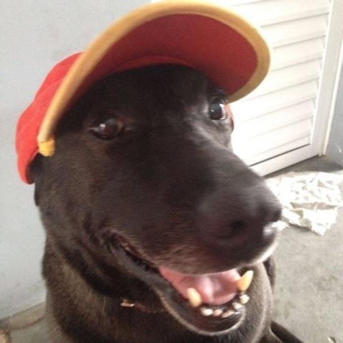 Negão, il cane benzinaio