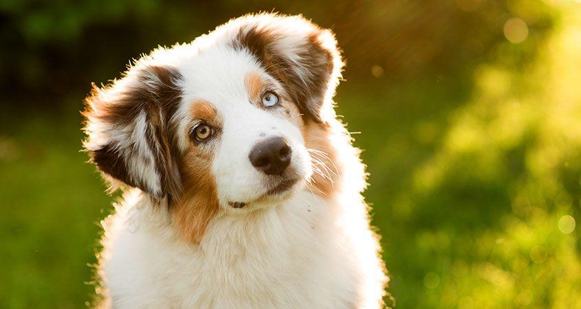 Strano ma vero! – 5 curiosità sui cani