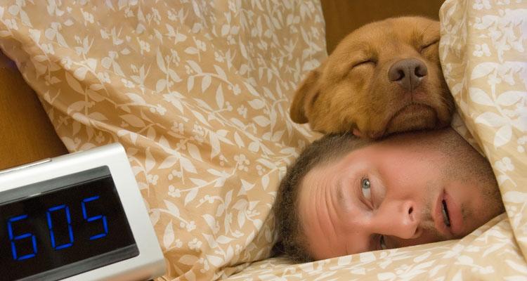 6 posizioni che i cani sono soliti avere mentre dormono. Scopri il loro significato!